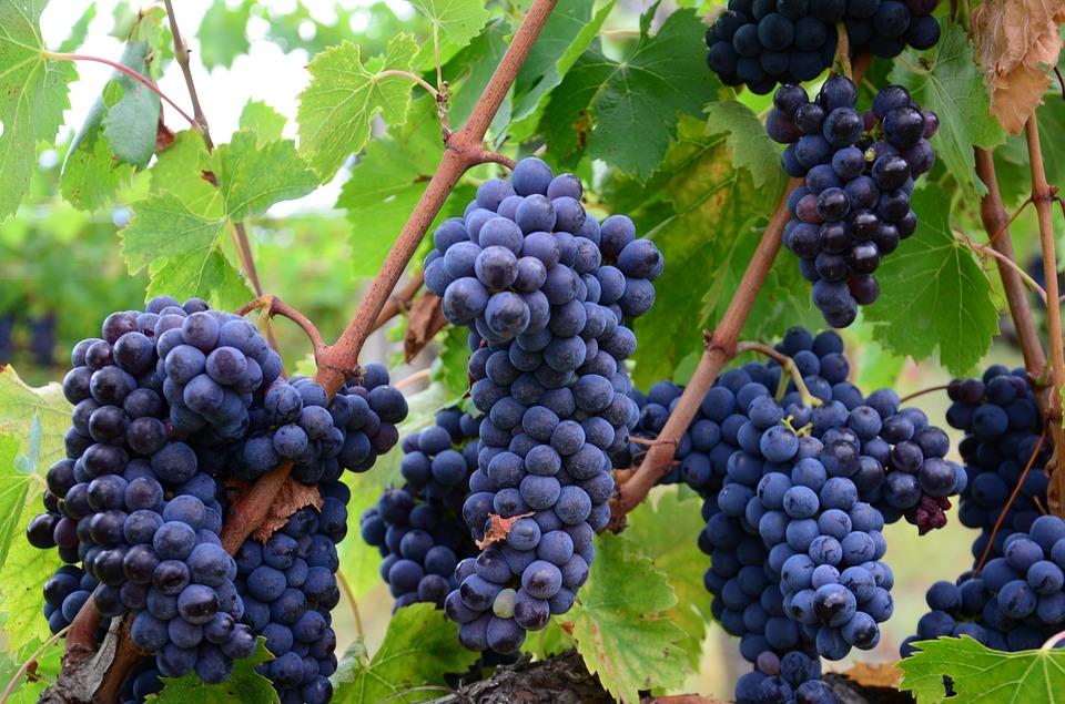 イタリアワインの道は一日して成らず